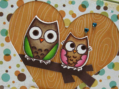 Owl close up_TRACY